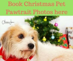 Book your Christmas Pet Pawtrait here
